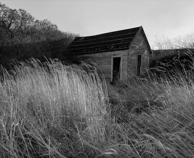Shack with Blowing Grass, Eastern Washington