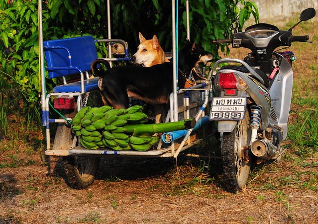 ,, Tally Me Banana ,,