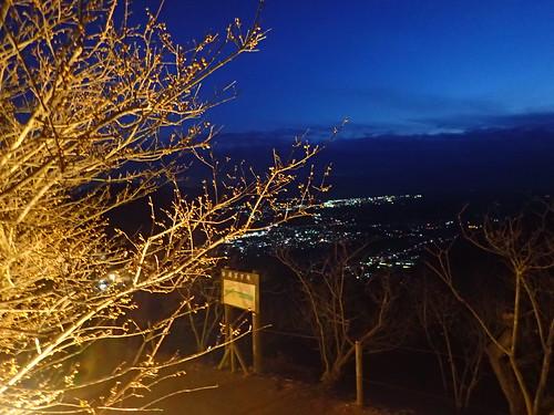 【今年初】長瀞宝登山臘梅園でライトアップを実施☆特別感のあるロウバイを撮影しよう