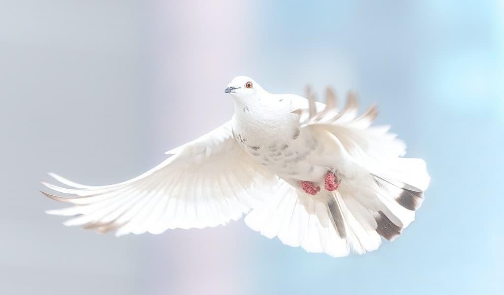 un-robot-équipé-de-plumes-de-pigeons-vole-comme un véritable oiseau