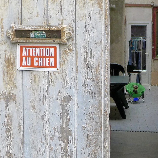 Beware the Dog