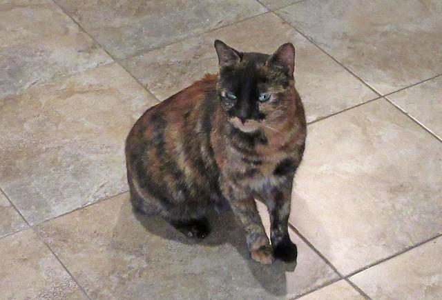 CatsBigger-1