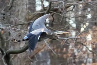 heron 15 (2)