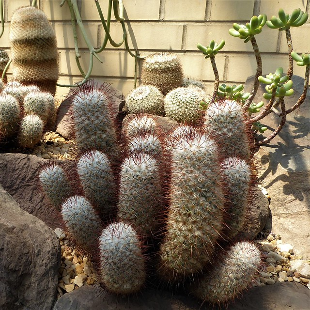 Chicago, Garfield Park Conservatory, Desert Room, Cactus Family