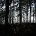 ...Waldlichter...