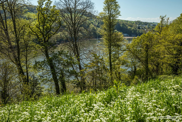 """Looking west to Dittisham from """"Greenway,"""" above the River Dart, Devon."""