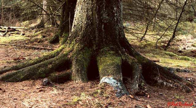 Tree Roots (2288)