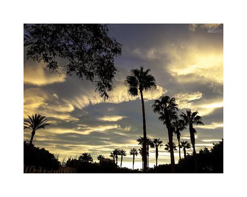 ángelmartínmateo ángelmateo elejido almería españa cielo nubes atardecer ocaso sky clouds sunset palmeras parque park palms covid19 coronavirus incertidumbre uncertainty entiemposdifíciles indifficulttimes