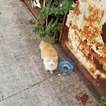 Beirut cat