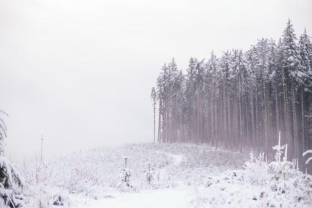 January Snow-6537