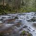 River at Reelig Glen