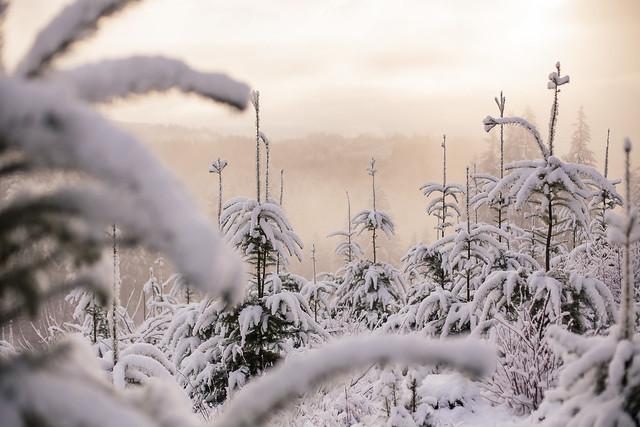 January Snow-6686