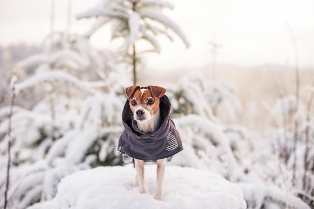 January Snow-6670