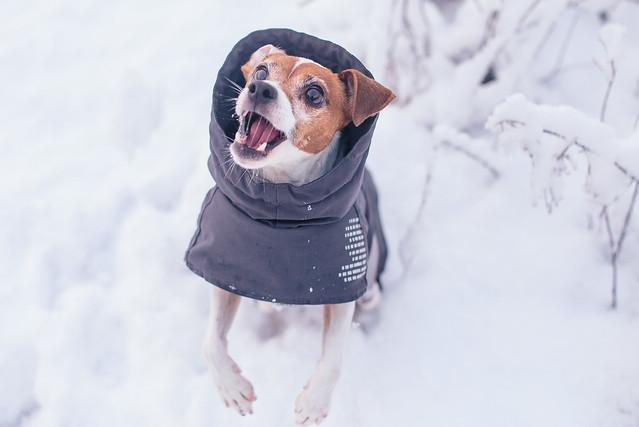 January Snow-6534