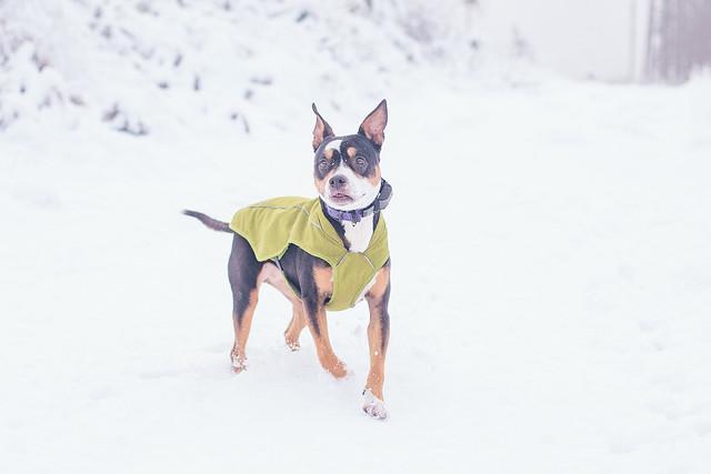 January Snow-6521