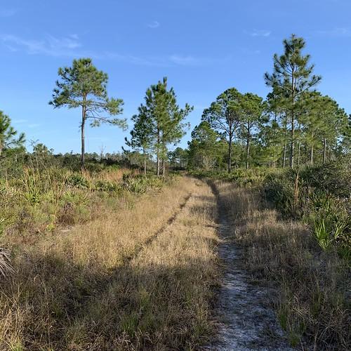 florida naturecoast landscape springhill gulfcoast