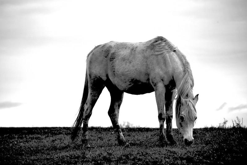 Horses 04.01 (3)