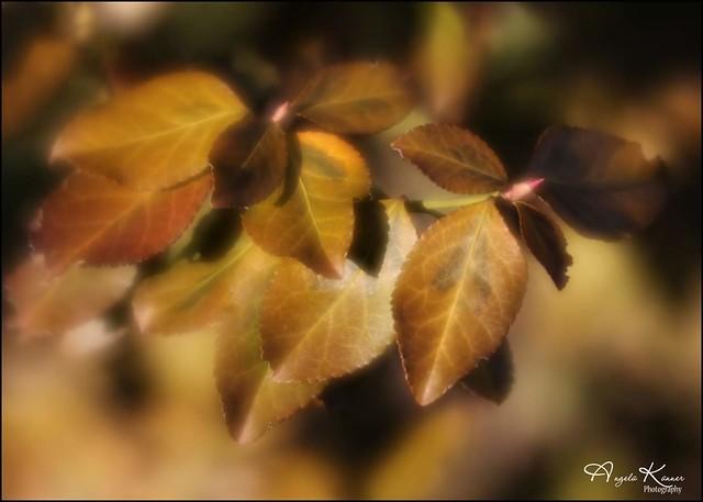 Golden In The Garden...