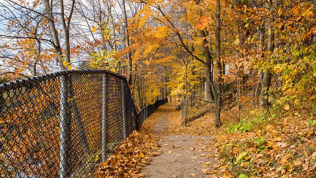 Automne, autumn - Parc Chauveau - Québec, Canada - 4931
