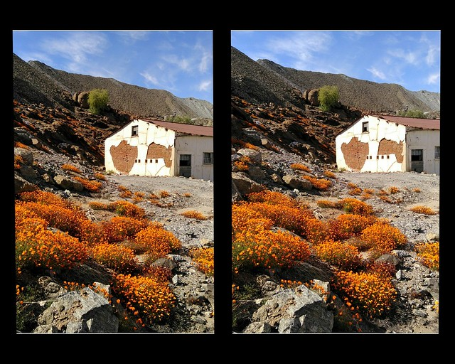 Flowers in 3d.. parallel view