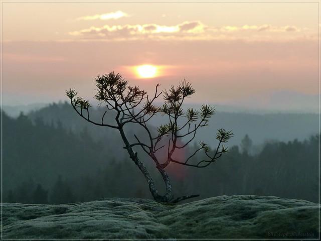 Morgentraum mit kleinem Baum