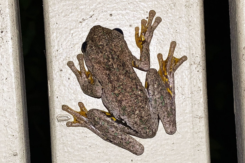 Fence frog
