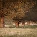 Baumreihe im Herbst