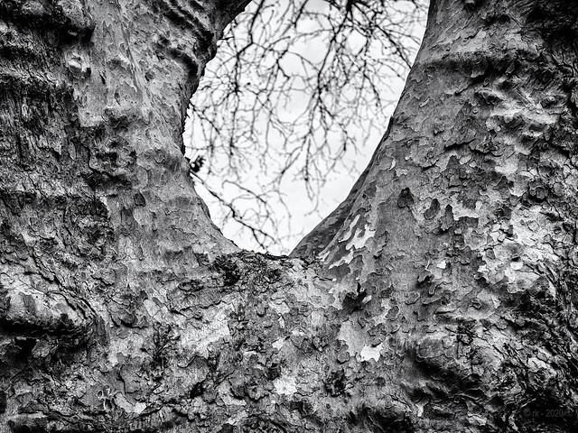 The Tree's Gorge...