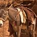 Petran Donkey