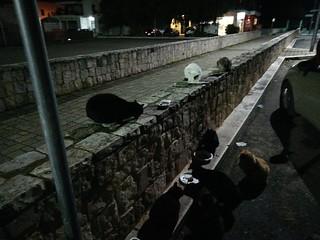 Colonia felina a Turi