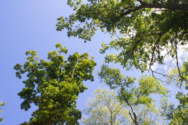 Blue Skies, Leafy Trees, September 11, 2018.