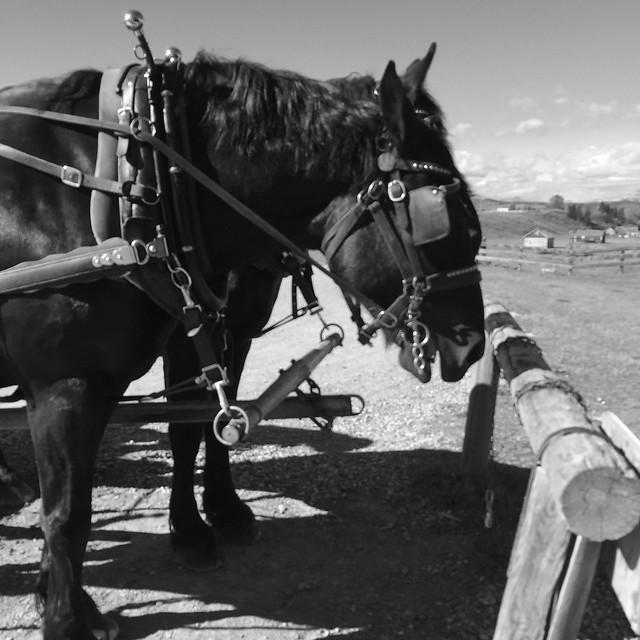 HFF Bar U Ranch