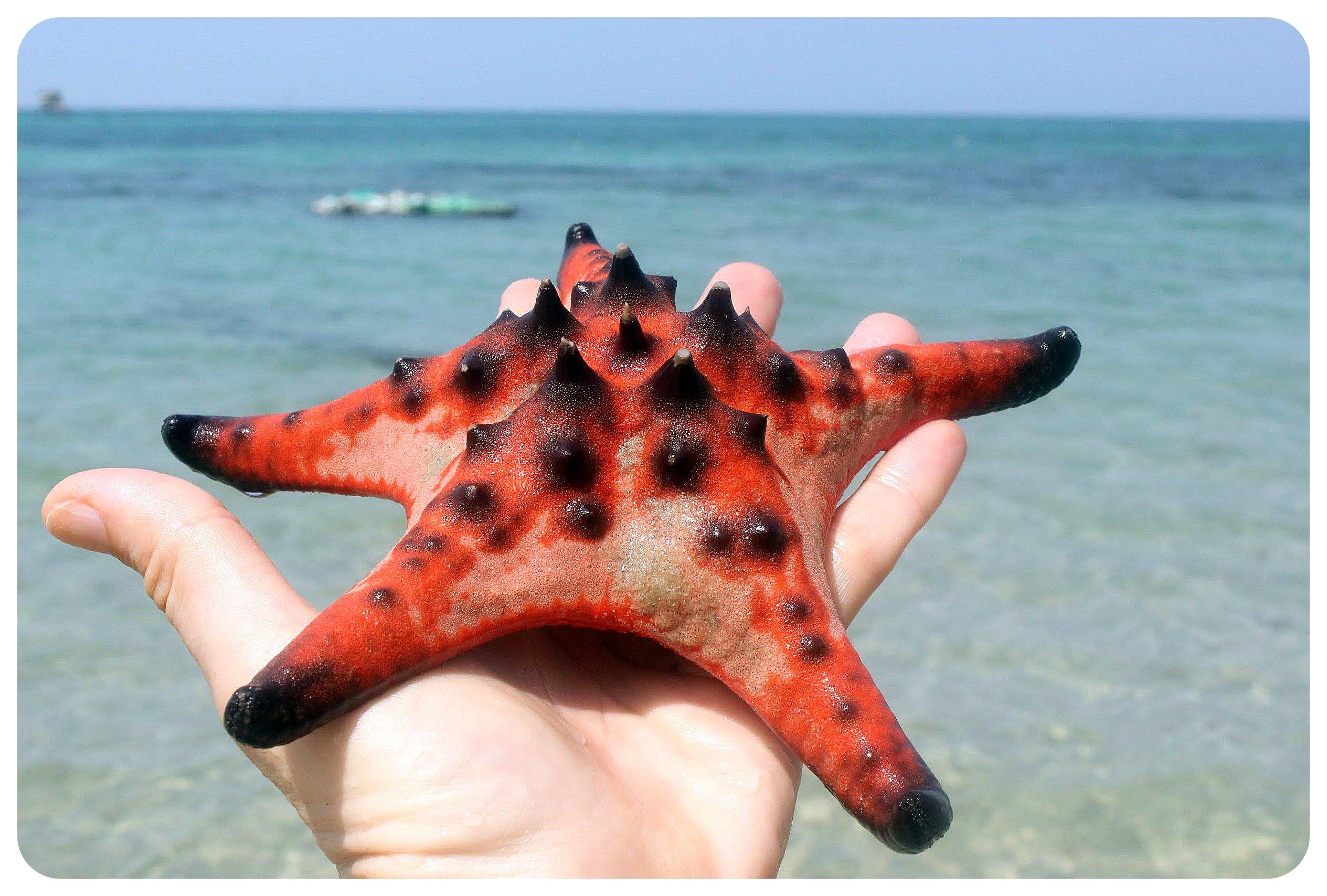 phu quoc starfish4