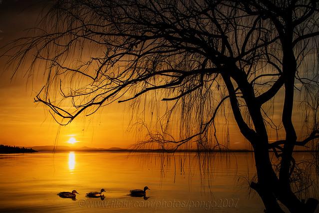 Three ducks went sailing by-
