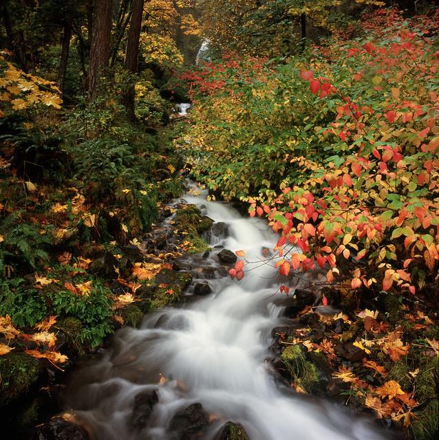 Wahkeena Falls, Autumn 2019