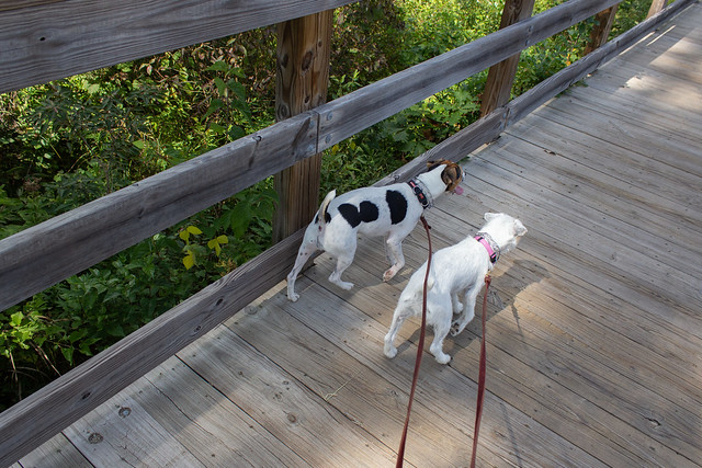 Dooley and Maddy on the Boardwalk