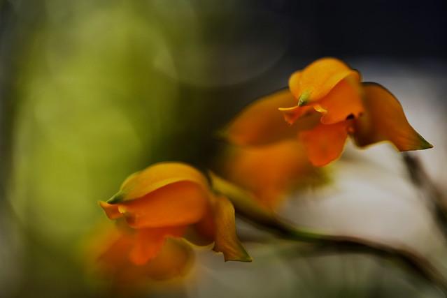 flower 1835
