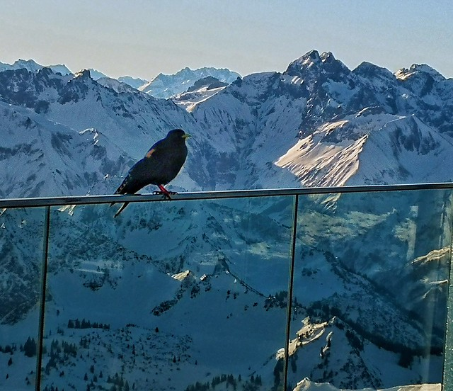 On the roof of mount nebelhorn..crows