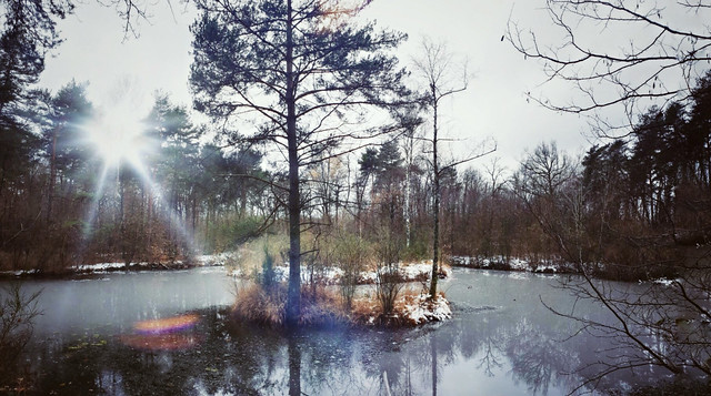 Mid - Winter