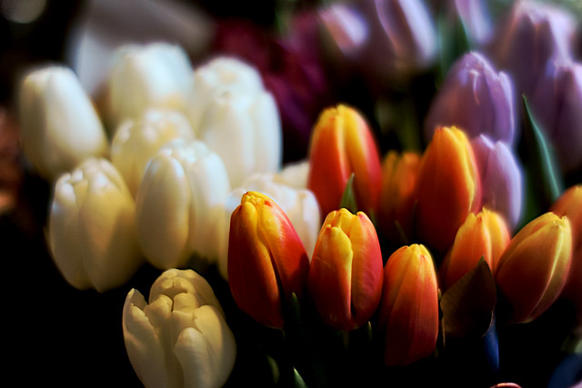 How about more tulips?