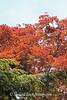 Dawes Arboretum (46)
