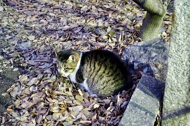Today's Cat@2020-01-18