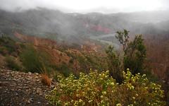 Quebrada de Palala (Bolivia) (5)