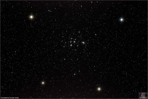 The Beehive Cluster (M44) in Cancer