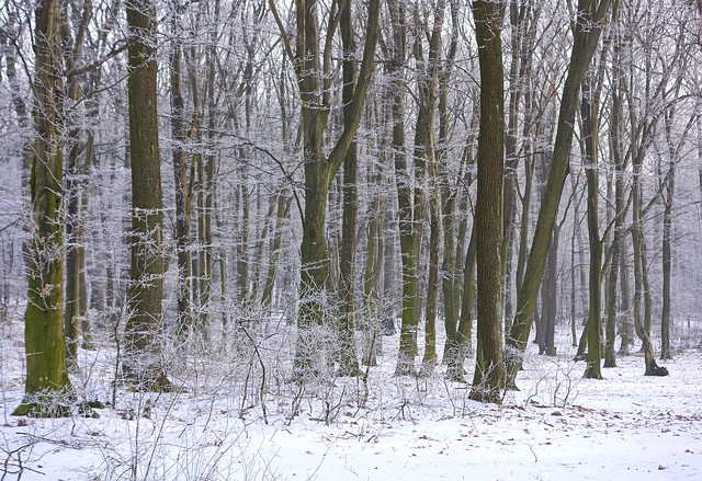 Magical winter forest