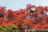 Dawes Arboretum (45)