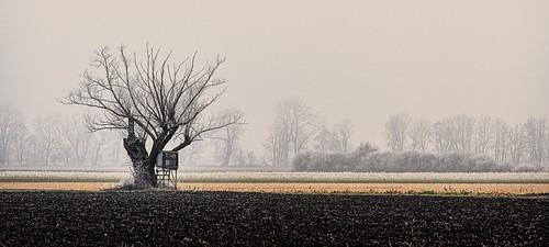 A foggy afternoon