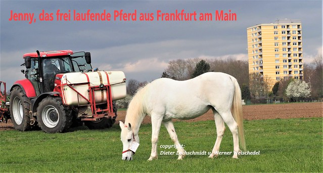 Germany - The famous Internet Video Horse Jenny in Frankfurt am Main - known in over 1 Billion Video Clicks in the Internet - The German Press Agency dpa has send Videos too many TV Stations in the World