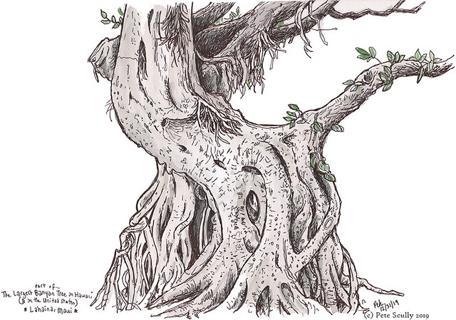 Lahaina Banyan tree Maui