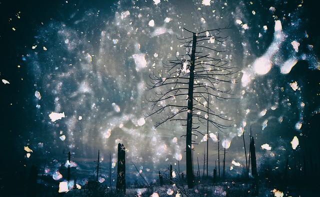 Treasury of Snow